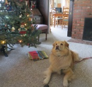 Sula spent Christmas Day with us